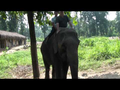 Wsiadanie na slonia