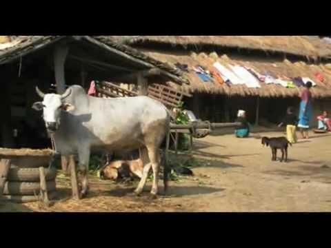 Rejser Ferie i Nepal Chitwan ferie rejser Kathmandu Nepal