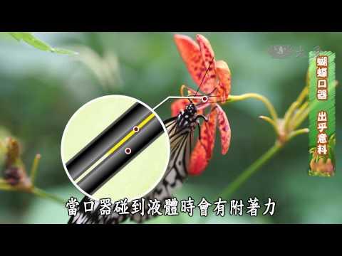 【呼叫妙博士】20140919 - 再造蝴蝶王國 - YouTube