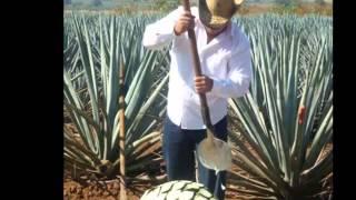 Video El Sombrero y La Salud