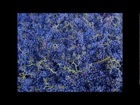 A day on Kanu – 2012 Merlot Harvest