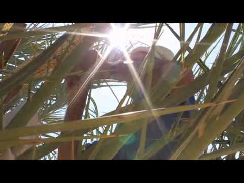 Moroccan Date Farmer