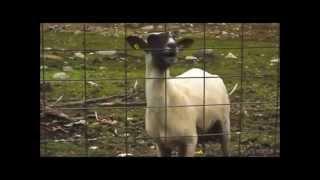 ► Arash Feat. Sean Paul - She Makes Me Go   Goat Edition [HD]