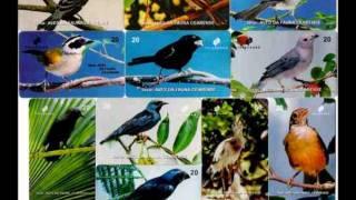 EARL GRAND scarlet bird   BEN MUSIC