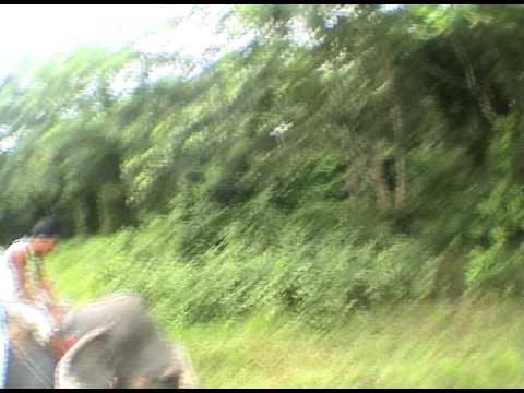 Elephant Safari Chitwan Npark Nepal