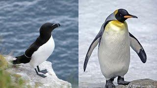 PINGOUIN OU MANCHOT ? QUELLE EST LA DIFFÉRENCE ?