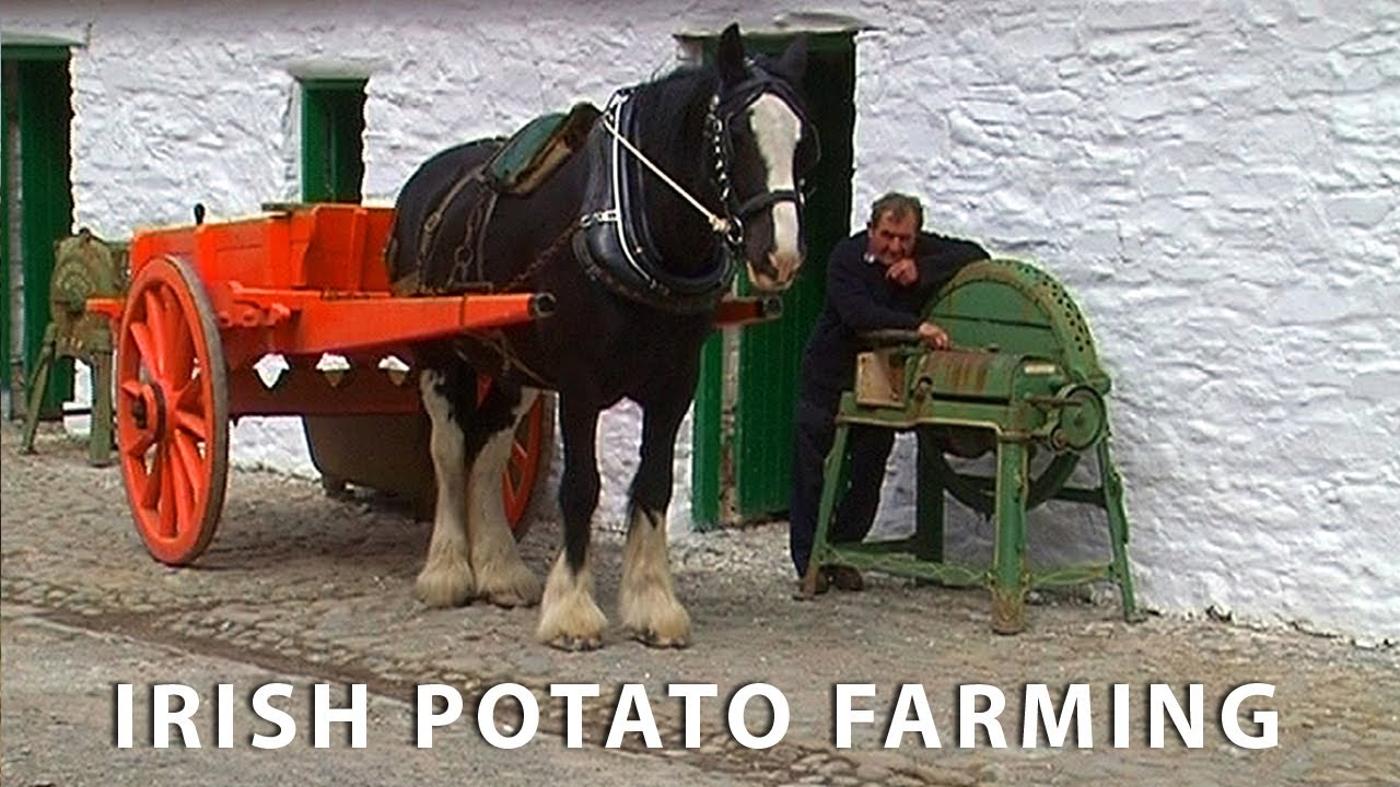 Vintage Potato Farming in Ireland - Farming with Horses & Vintage Tractors