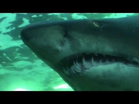 The Two Oceans Aquarium (Cape Town/Kaapstad/iKapa – South Africa)