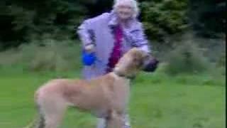 Babička a pes