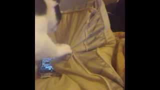 Kitten's reaction to meowing ringtone