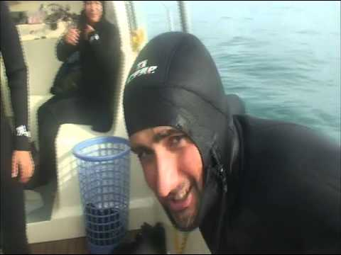 Cage Diving with Great White Sharks in Gansbaai, South Africa