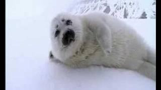 Seal Pup Encounter