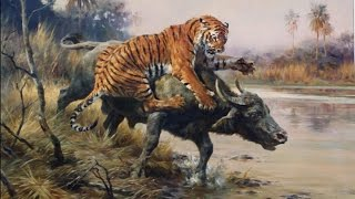 Animals/Aggressive behavior 3(Buffalo vs tiger,tiger vs tiger,сrocodile vs deer