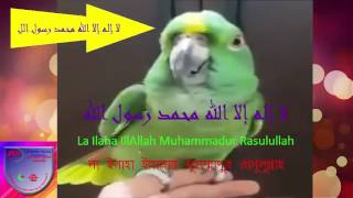 Miracle     Miracle     Parrot Saying     LA ILAHA ILLALLAH MUHAMMADUR RASULULLAH