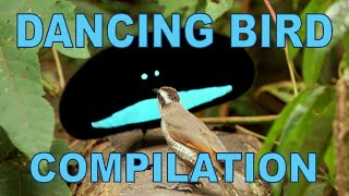 Weird & Wonderful Dancing Birds Compilation (Part 1) width=