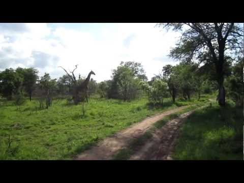 Jessie's Journeys – South Africa – Giraffe