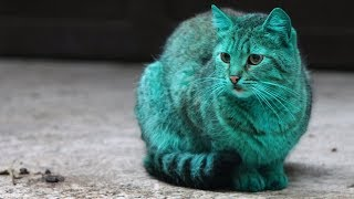 The Mystery Of Bulgaria's Green Cat - Getty Images TV