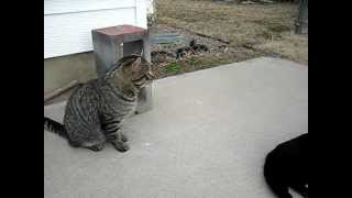 Tibbs and the friend