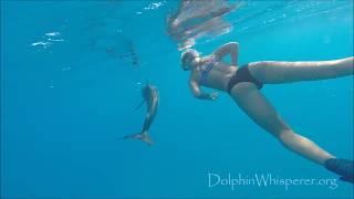 Mathea's swimming with wild dolphins in Bimini, Bahamas