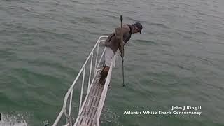 White shark surprise breach off Wellfleet, MA (7/30/18)