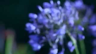 fotos de flores que eu gosto