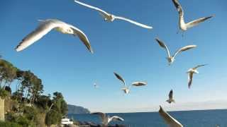 Relaxing Meditation Music @ Beach with Seagulls