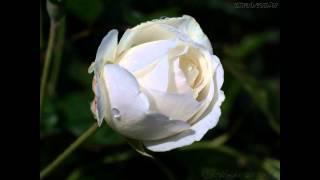 Mariza Rosa Branca (Milky's Cured Remix)