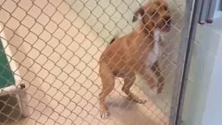 Dog Adoption Room 10/21/16