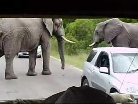 South Africa 2010  .wmv