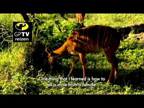 GPTV Reizen Zuid Afrika Safari