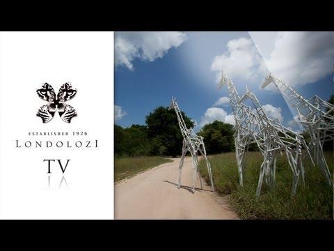 The Christmas Journey – Londolozi TV