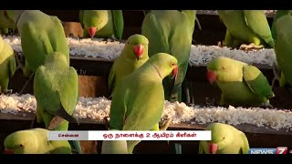 Man turns his house to Parrot Sanctuary at Chennai | Tamil Nadu | News7 Tamil