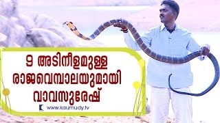 Amazing 9 feet long King Cobra released in the wilderness | Snake Master Ep #239 | Kaumudy TV