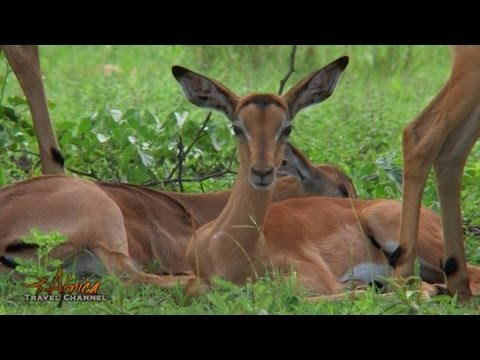 Dongola Ranch near Musina in Limpopo South Africa – Visit Africa Travel Channel.