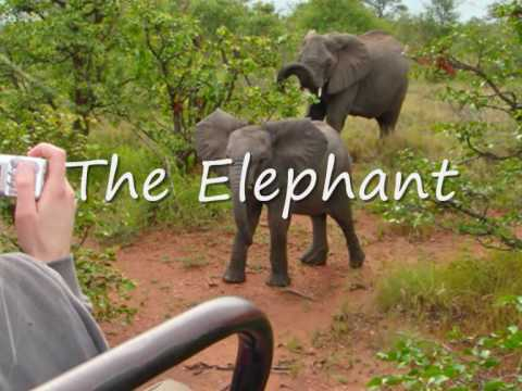 The big five – Motswari Private Game Reserve