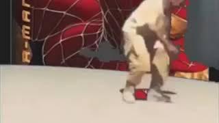 Kanye dancing to italian music