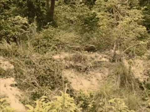 Nepal–Bardia National Park Aged Film