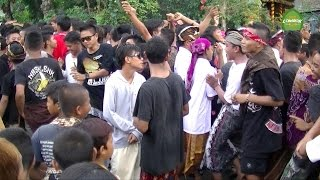 Kecimol Merpati Goyang Desa Peteluan Indah Dengan Lagu Salam Rindu - Tipex