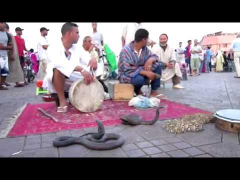 Snake charmers in Djemaa el Fna, Marrakech, Morocco
