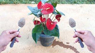 Lindo! Meia colher faz florir muito (qualquer planta)