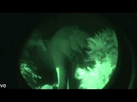 B.F.E – Elephant Rock Private Safari Lodge's Night Visitor