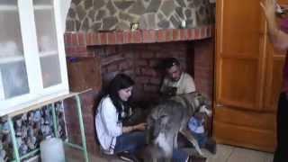LA FAMILIA EN PLENO , visita de Oliver de Eralin de Bilsaru a LOS CACHORROS
