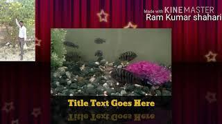 मछली  का गाना