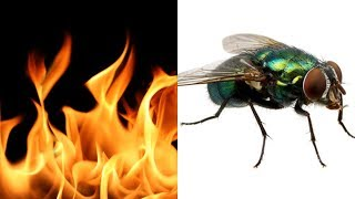 Fireflies but every word is a Google image