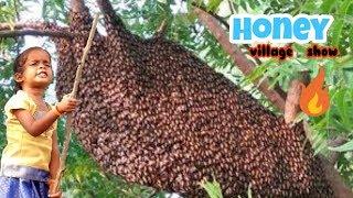 Honey Hunting 🔥biggest honeycomb | my village show | creative junnu