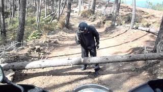 Como cortar um pinheiro com um machado dos chineses...lol