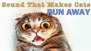 Sound That Makes Cats Run Away | HQ
