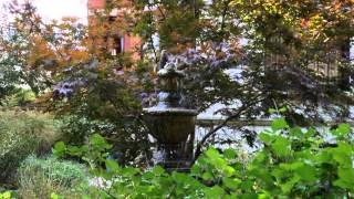 10 Seconds of Nature (Birds in Water Fountain)