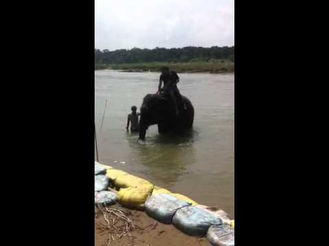 Elephant washing in Chitwan National Park in Nepal