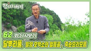 진짜배기 62화 다시보기 (달뿌리풀 / 밀양 호박소와 얼음골 / 죽순요리모음) 다시보기
